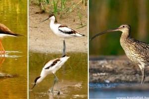 Melyik partimadár legyen 2019 madara? Szavazz!