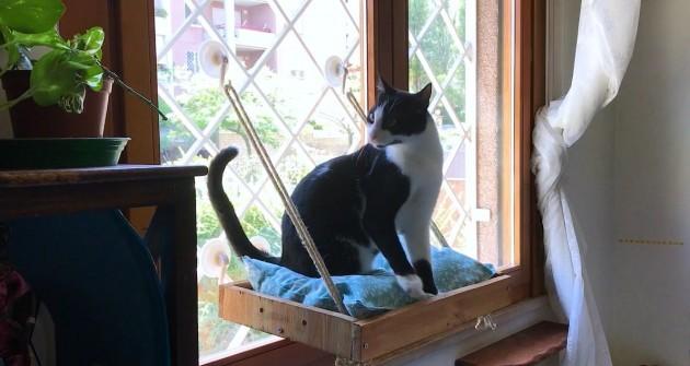 Készítsünk pihenőhelyet a cicának az ablakba