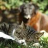 Mi a boldog kutya-macska kapcsolat titka?