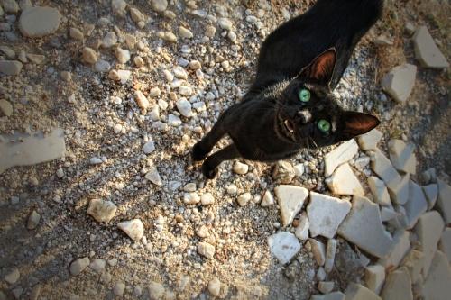 cat-986571_1280