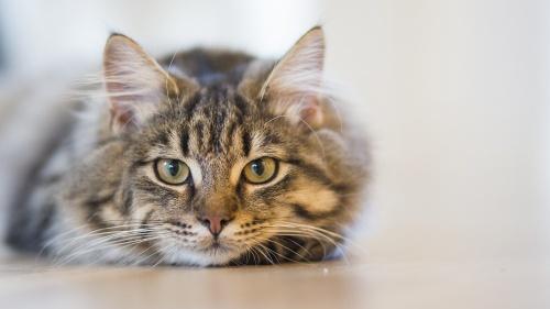 cat-1686730_1280