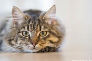 Augusztus 8-a a macskák világnapja