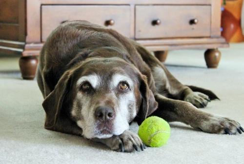 lazy-dog-1959856_1280