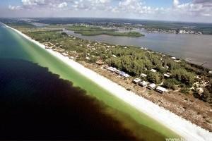 Emberre is veszélyes, mérgező algatelepek lepték el Florida egyes partvidékeit