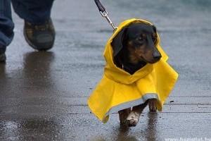 Van már a kutyádnak esőkabátja? Most lehet!