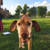 Kutyaévekben számolva: öreg kutya is lehet boldog kutya