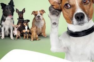 Sok kutya talált haza egyes benzinkutak mikrochip-leolvasóinak segítségével