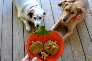 Halloween játék kutyákkal - szuper videó