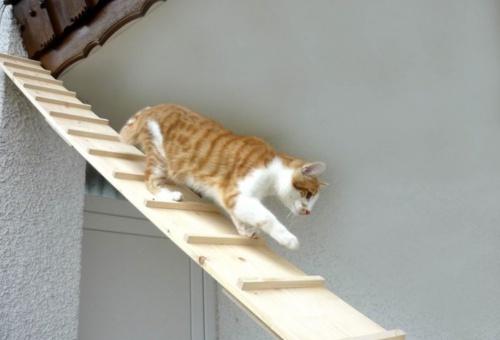 macska_tyukletra