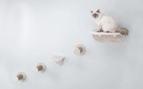 macskaletra_szobaba1