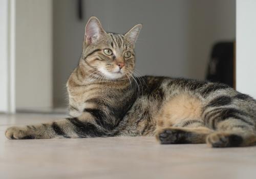 cat-1606607_1280