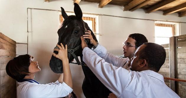 Dobogós az Állatorvostudományi Egyetem a hazai felsőoktatási rangsorban