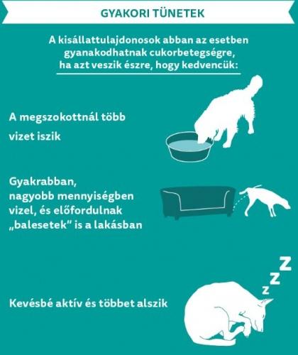 cukorbeteg_tunetek1