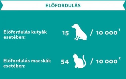 cukorbetegseg_elofordulas