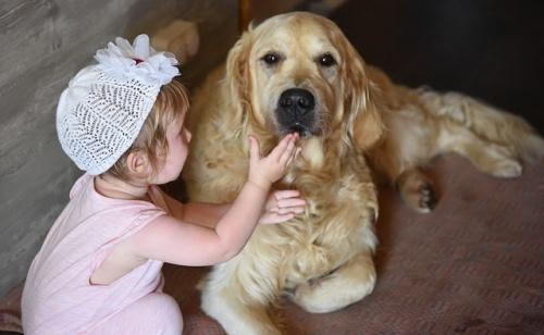 dog-2645627_640