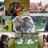 Top 10 kutyafajta: őket keresték a legtöbbet a neten