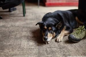 Siker: 7 millió forint értékű adomány érkezett a vidéki menhelyen élő kutyáknak