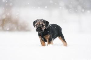 Első találkozás a hóval: így örül a kutya, macska, görény