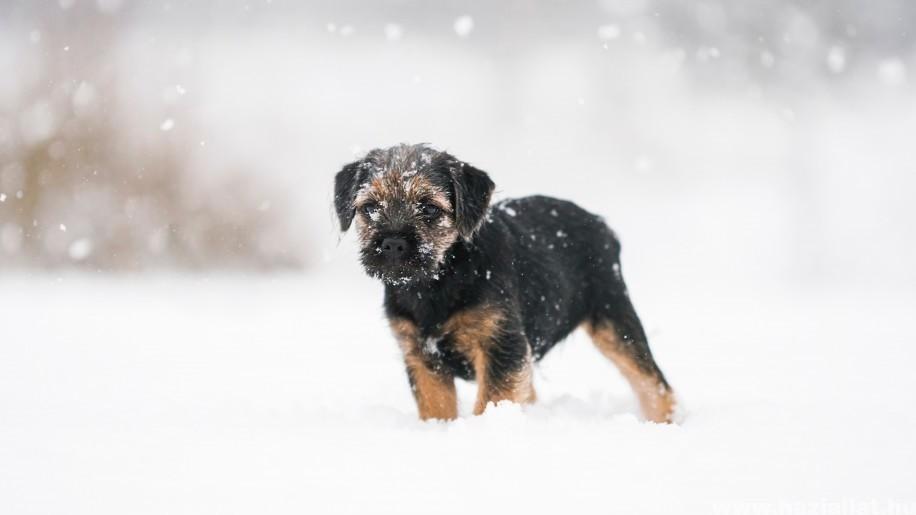 Havazás: erre figyelj, ha kutya, macska, vadászgörény van a családban!