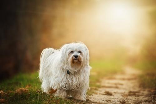dog-1134492_640