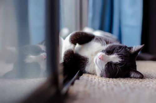 cat-1903024_640