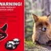 A héten indul a rókák tavaszi vakcinázása - ezalatt ebzárlat van érvényben