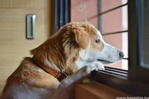 Ha biztonságot nyújtunk a kutyának, nyugodt lesz ő is?