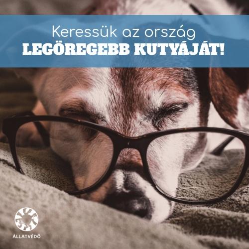 hangya_kozosseg_legoregebb_kutya_fb_02