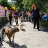 Belvárosi Kutyafesztivál 2019: kutyajósda Bach Szilviával