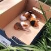 Tengerimalac bébiket dobtak ki cipősdobozban