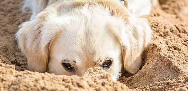 kutya_strand_homok