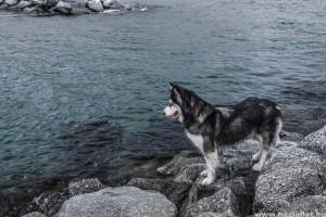 5 biztonsági tipp, ha a kutyusod strandra akarod vinni
