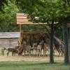 Állatos program a Velencei-tó mentén: vadaspark látogató