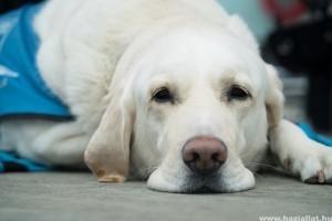 Hogyan használjuk felelősen az állatgyógyszereket?