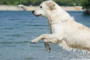 Jövőre már Keszthelyen is strandolhatnak a kutyák