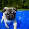 Hogyan hűtsük kutyánkat a nagy melegben?