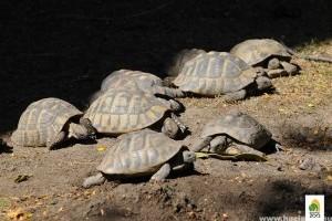 Kővel sújtottak halálra egy görög teknőst a fővárosi állatkertben