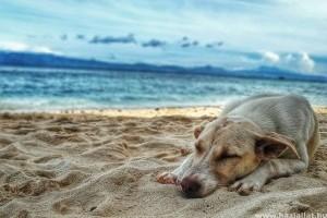 Segítség a nyári kutyabajokra: hányás, hasmenés, allergia
