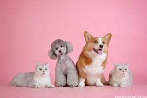 A lepkeszúnyog veszélyt jelent a macskákra, és a kutyákra is