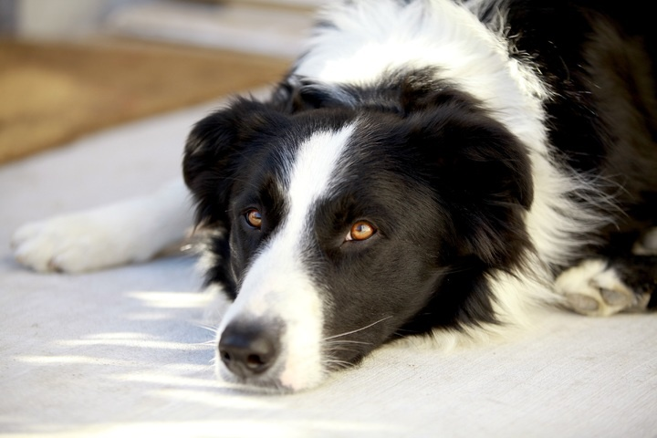 black-and-white-puppy-dog-animal-cute-male-692239-pxhere.com