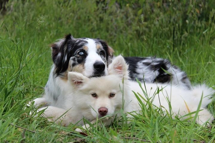 nature-grass-outdoor-play-puppy-dog-1029665-pxhere.com