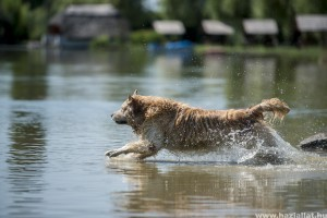 Pécs mellett, Hirden is strandolhatnak a kutyák