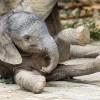 Cuki elefántbébi a bécsi állatkertben