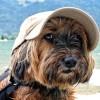 Hogyan nyaraljunk kutyával?