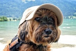 Ezekre figyelj, ha kutyával nyaralsz!