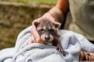 Kis mosómedvével gyarapodott a Debreceni Állatkert
