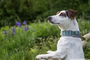 Kutya-macska ivartalanítási akciók Érden - 2019 ősz