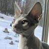 Rizikómacska igaz története: biztosítást kötni macskára?