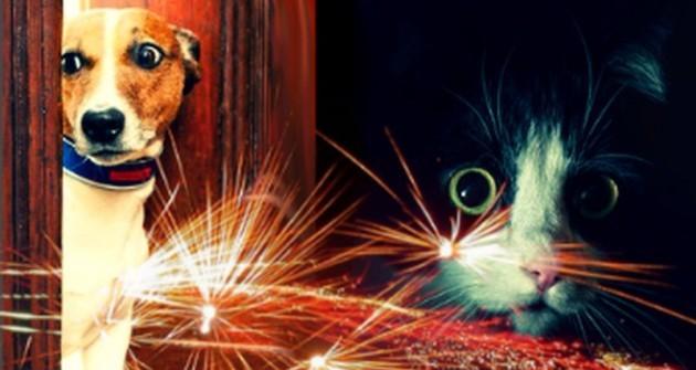 4 tipp a tűzijáték idejére