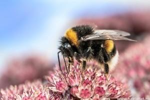 500 millió méh pusztult el Brazíliában